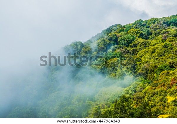 Forest with mist in national park, Thailand