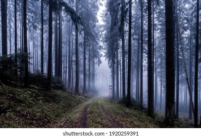Forest mist trail. Trail to forest mist. Misty forest trail. Forest mist view