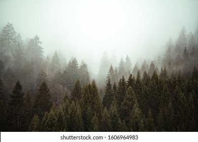 Forest mist in a vale. Stunning mythical magical atmosphere. Misty landscape with fir forest in german alps, close to Garmisch-Partenkirchen, Bavaria.