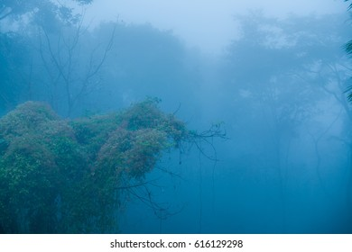 Forest with mist in winter season at Phayao province, Thailand.