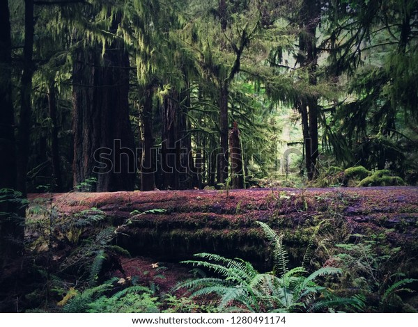 Forest Moon Endor Stock Photo Edit Now 1280491174