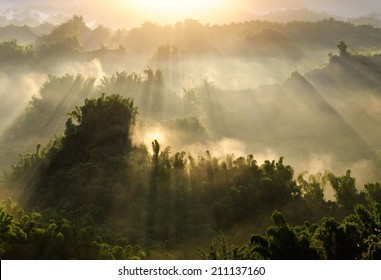 Forest morning with golden sunlight in countryside in Taiwan, Asia.
