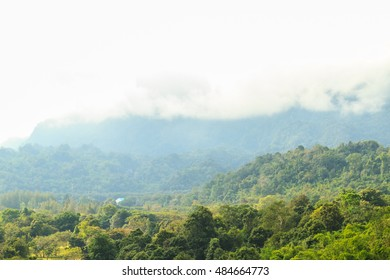 Forest in the morning and misty mountain in the background, Thailand.