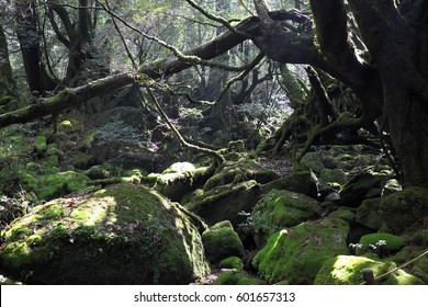 Forest of moss