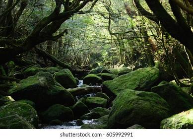 Forest of moss Shiratani