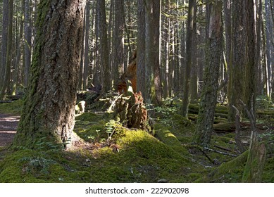 Forest - mossed floor and trees with old stump