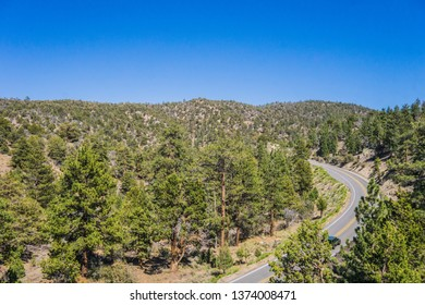 Forest of mountain pine trees stand alongside an empty highway in California.