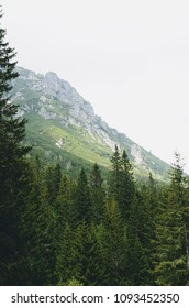 Forest and Mountain summit - Vysoke Tatry in Poland
