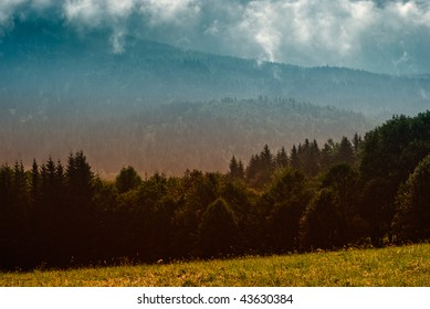 Forest in the mountains in the clouds with fog