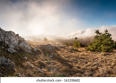 Forest in the mountains covered with clouds, landscape
