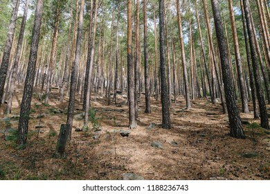 forest in the mountains of the middle Urals.Russia
