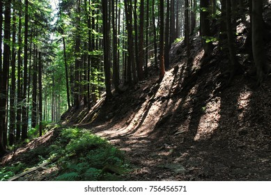 Forest and mountains. Nature landscape. Green summer day. Moss on rocks and trees. Tranquil scenery of natural wonders. Trip through path between trees. Rocky hills. Branches and roots.