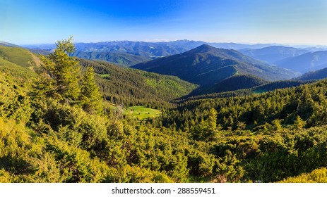 Forest in the mountains on a Sunny day, panorama