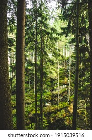 Forest mountains trees scenery. Beautiful vertical vintage trees forest.