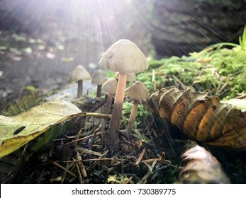 Forest mushroom in the sunlight