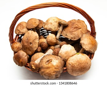 forest mushrooms against a white background in a basket