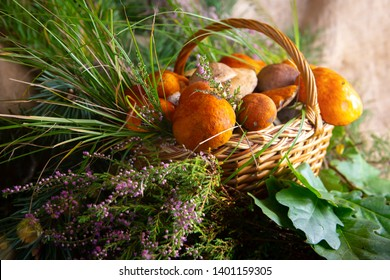 Forest mushrooms in the basket. White mushrooms. Autumn background with mushrooms and forest foliage. place for text.