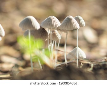 Forest mushrooms in the grass. Gathering mushrooms. Mushroom photo, forest photo, forest mushroom, forest mushroom photo in the field