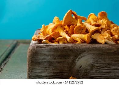 Forest mushrooms harvest, autumn food