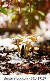 Forest Mushrooms in the Sun