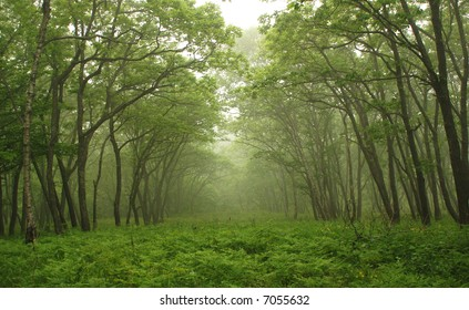 Forest, mystic way