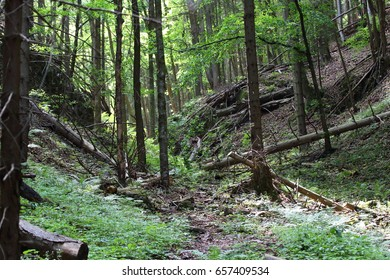 Forest in National park Slovak Paradise, Slovakia