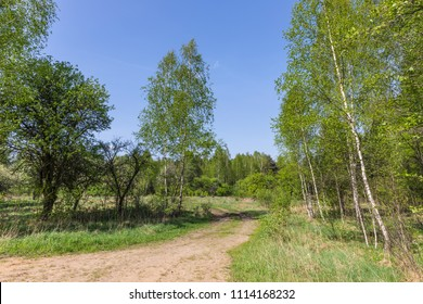 "Forest in the national reserve ""Belovezhskaya Pushcha"", Belarus"