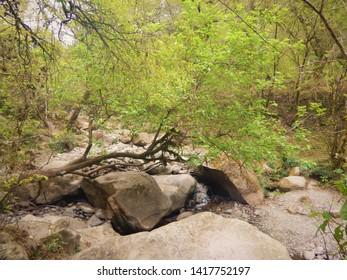 forest natural argentina salta san lorenzo jungle