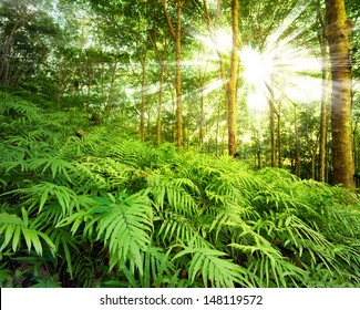 Forest nature background. Fern in jungle. Rainforest photography