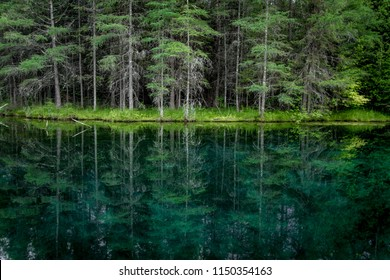 Forest Nature Background. Pine tree forest reflection in the pristine clear waters of the northern Michigan wilderness.