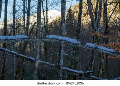 Forest and nature near Lake Konigssee. Bavaria. Germany