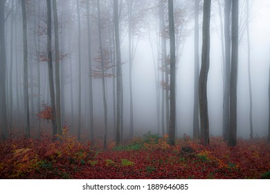 Forest with nature's finest colors