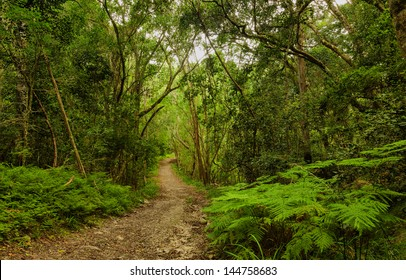 Forest - Natures Valley, Western Cape, South Africa