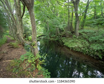Forest near Oshino Hakkai village, Japan. Oshino Hakkai is a small village in the Fuji Five Lake region, located between Lake Kawaguchiko and Lake Yamanakako.