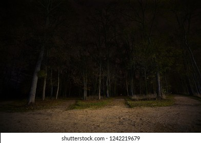 Forest at night. Dark crossroads in woods.