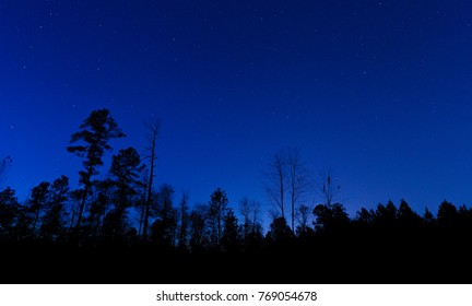 Forest in North Carolina with a stars above in a night sky