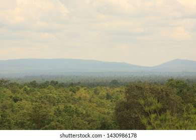 Forest in northeastern Thailand in the Phu Phan area, Sakon Nakhon,Green forest trees texture background. Nature landscape.