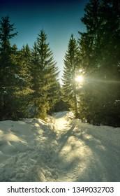 forest in Oberjoch in Allgäu in winter