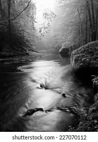 Forest on bank of autumn mountain river covered by beech leaves. Bended  branches above water. Black and white photo.