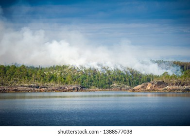 Forest on fire with burning pine trees in Karelia, on the White sea shore, Russia.