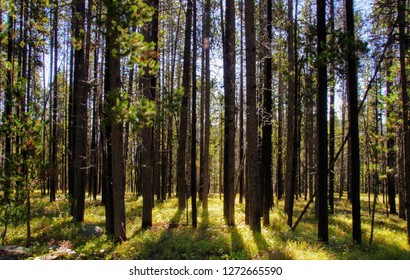 A forest on a hiking trail in Lewis & Clark National Park, Montana.