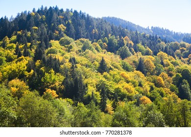 forest on a hill in the fall with blue sky