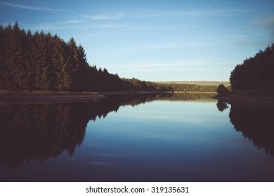 A forest on a lake with reflection
