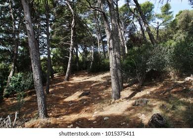 Forest on Lokrum Island, Croatia, with path