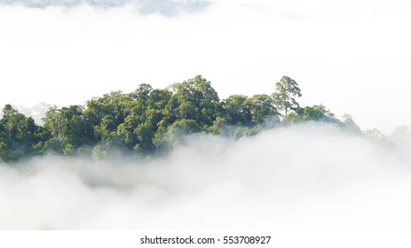 Forest on the mist