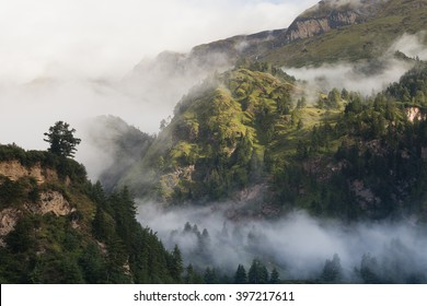 Forest on the mountain with mist.