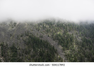 forest on the mountain slope in a fog