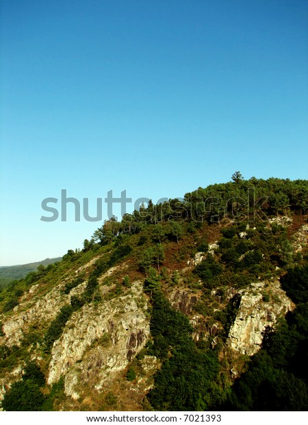 forest on a mountain top