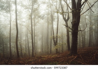 forest on rainy day nature landscape