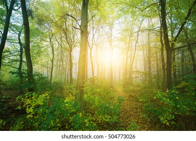 Forest on a sunny day